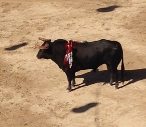 The first bull, the largest one at 545 kilos, seemed confused the entire time and turned out a rather passive opponent.