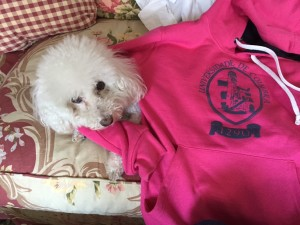 Sweatshirts come in the colors of the different departments, but I handed back the red one. The person selling them said pink represents early childhood education, and the cute pooch is clickbait.